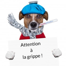 Attention à la grippe